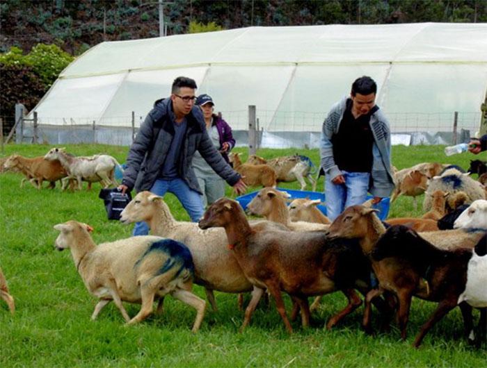 Vive la experiencia de ser Médico Veterinario o Zootecnista por un día en UNIAGRARIA