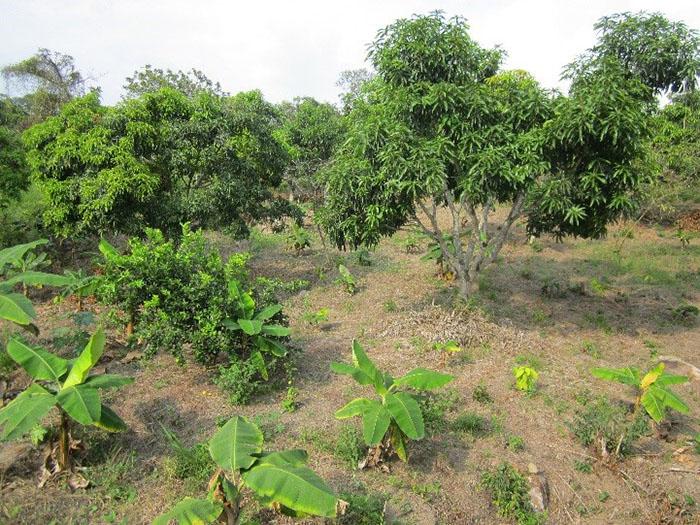 Área de Gestión del Conocimiento en Producción Agrícola