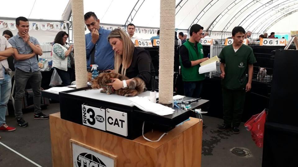 Gran Labor de Estudiantes en la Exposición Saint Valentine Cats