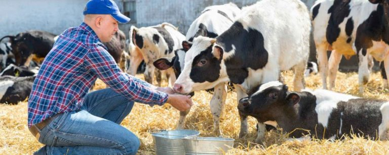 Especialización en Bienestar Animal y Etología