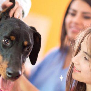 Sé un veterinario y zootecnista por un día