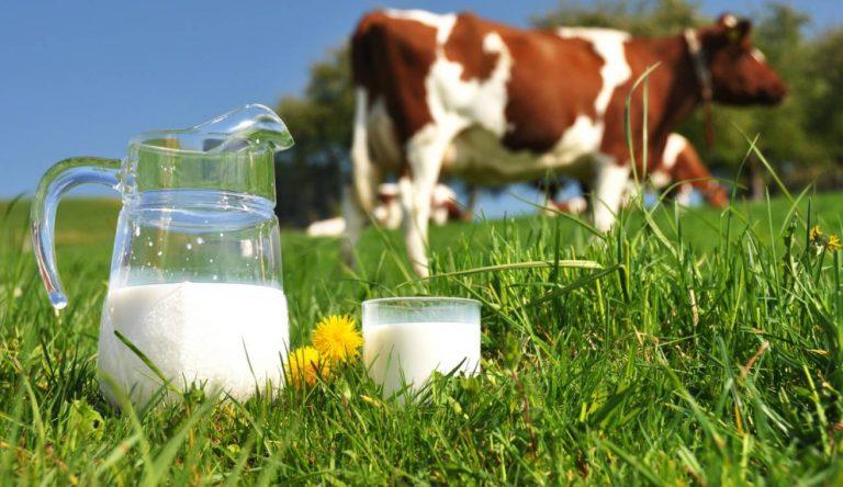 La leche, mitos y verdades sobre su producción y consumo. #UAenmedios