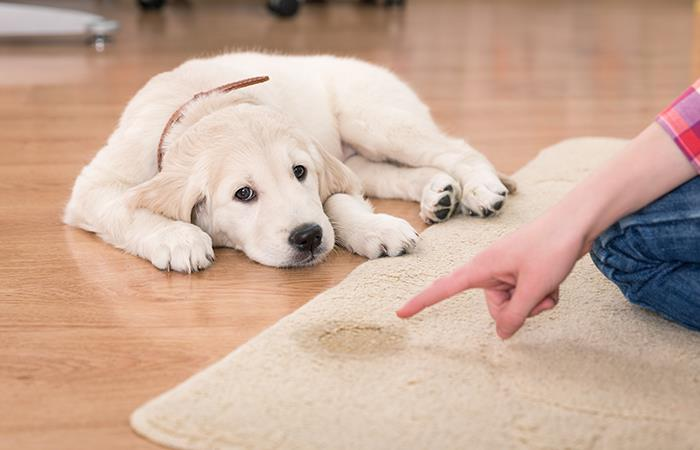 ¿Cómo evitar que las mascotas hagan sus necesidades en la casa? #UAenmedios