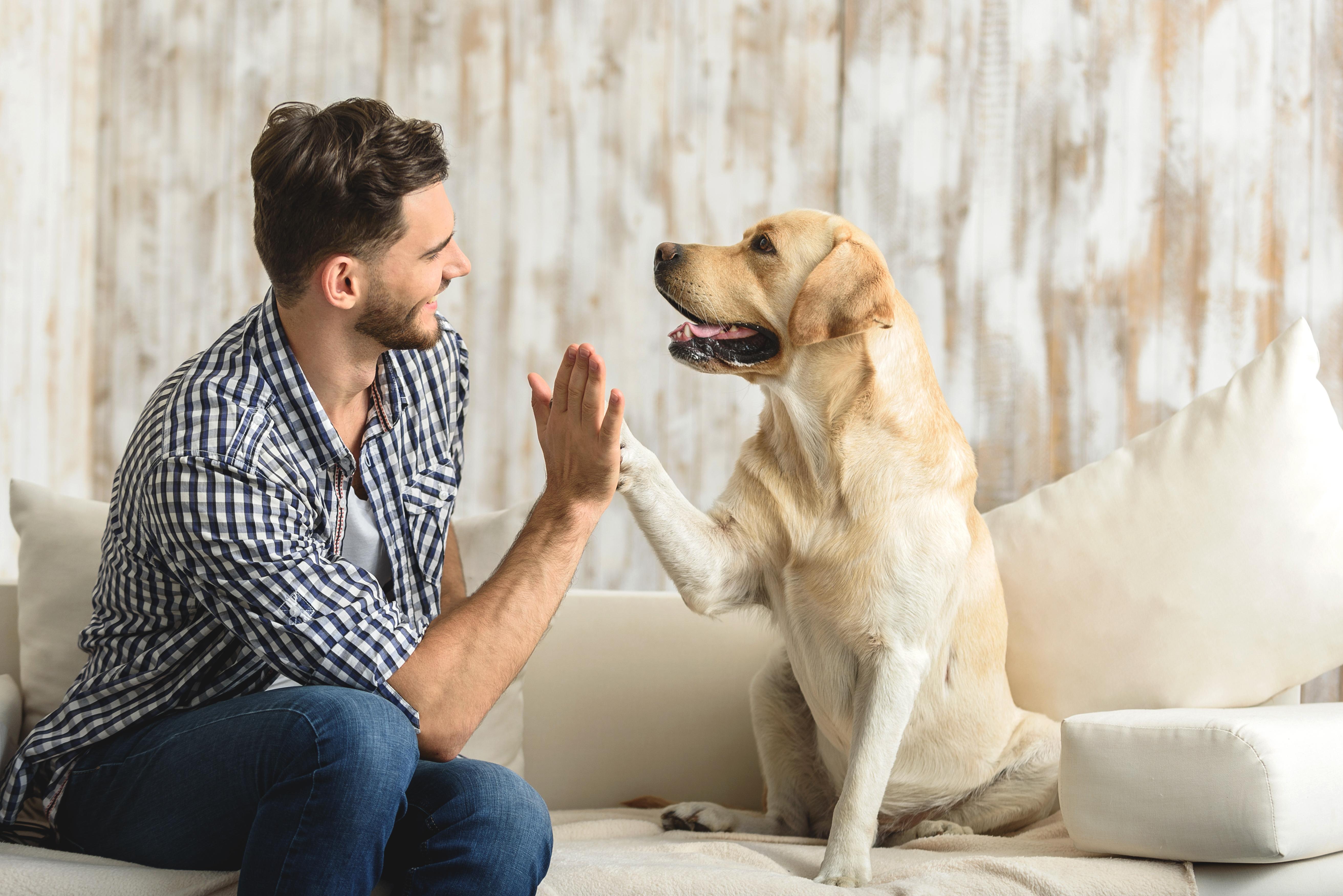 Cuida a tu mascota
