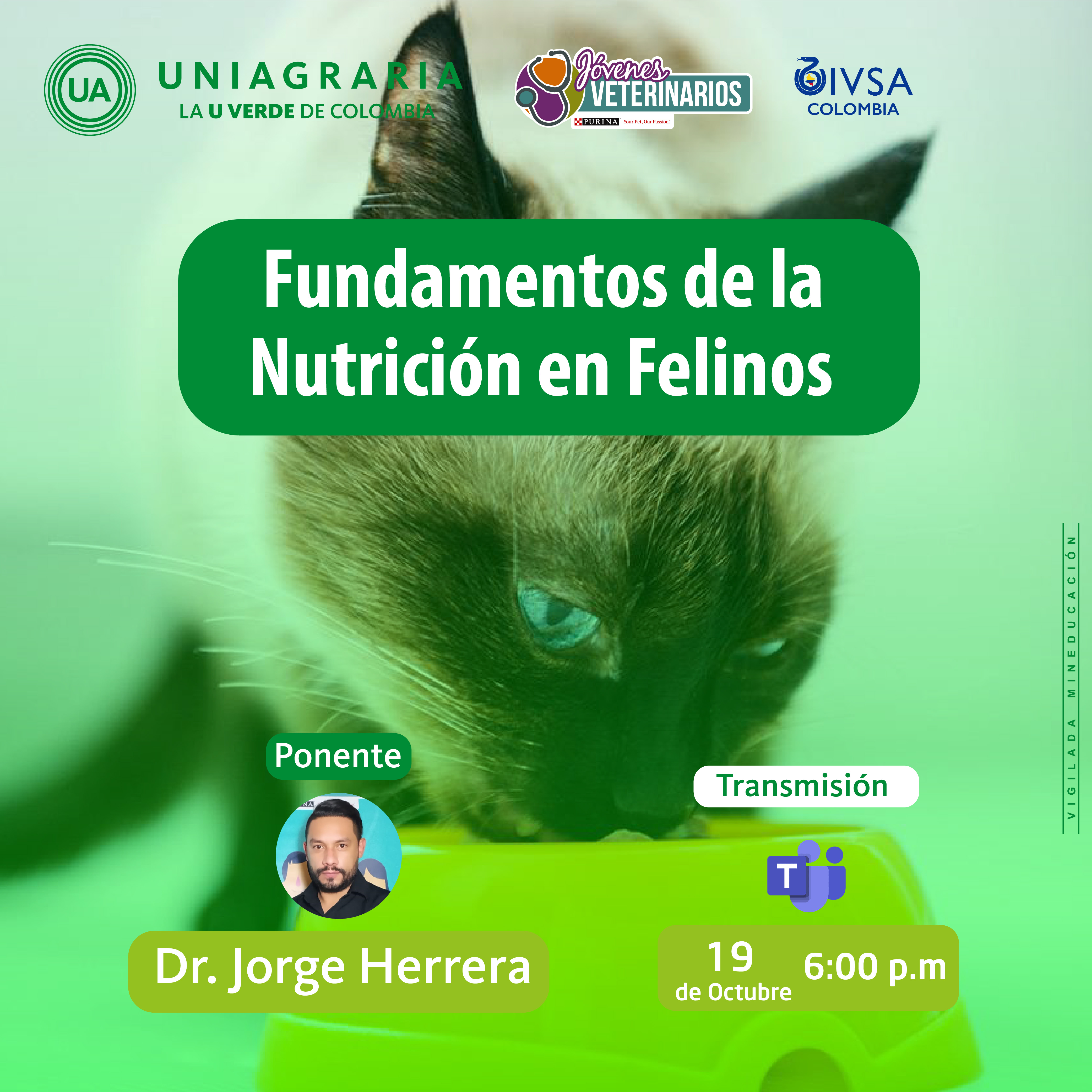 Fundamentos de la Nutrición en Felinos