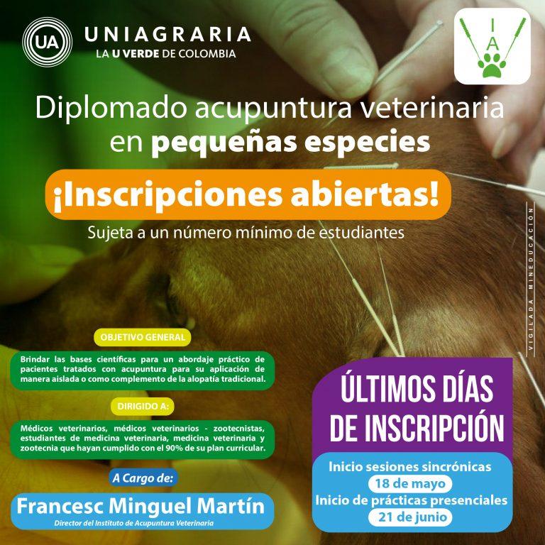 Diplomado acupuntura veterinaria en pequeñas especies
