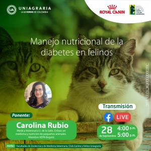 Manejo nutricional de la diabetes en felinos